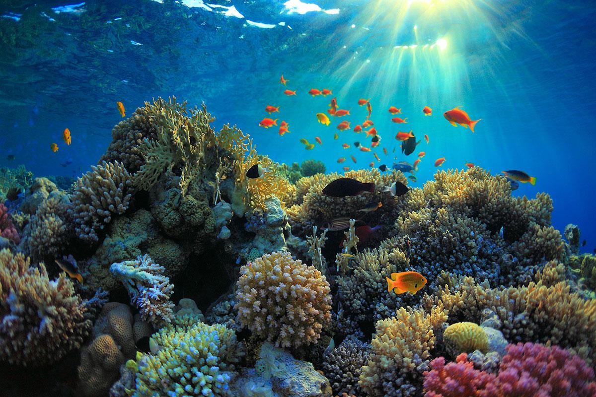 snorkling bali, bali diving, underwater reef, bali tour, tour bali
